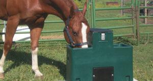 Equine | Horses