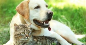 Cats, Dogs or Small Pets